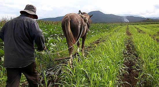 ¿Se vienen más impuestos para la tierra en Colombia?