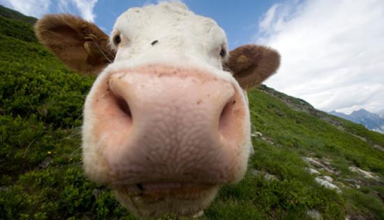 Modelo del valor razonable en negocios de ganadería